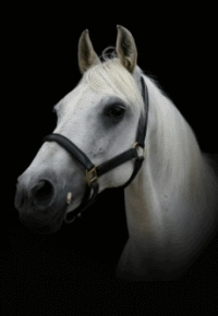 Tail End Jewellery's Horse Hair Jewellery